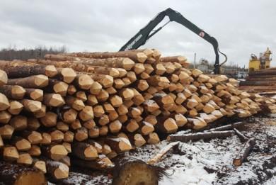 Директор фирмы в Полоцком районе поставил в Латвию древесину на 42 тысячи евро. Выручку в Беларусь он не вернул