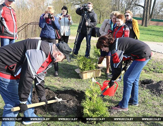 На субботнике Наталья Кочанова высаживала туи в Полоцке