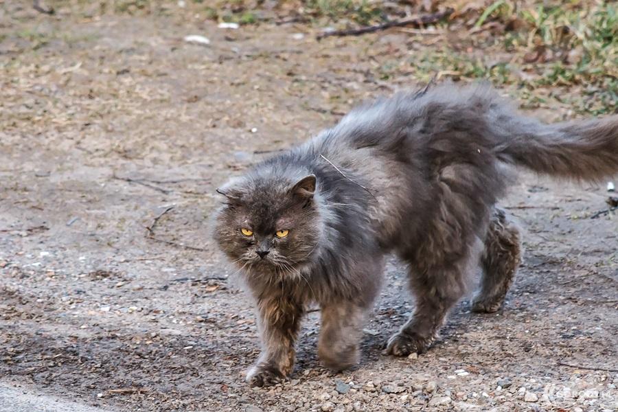 polack_cat