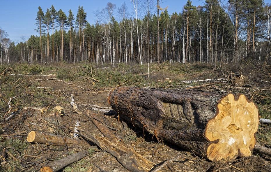 valka lesa