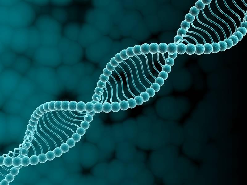geneticheskaa-raspolozhennost